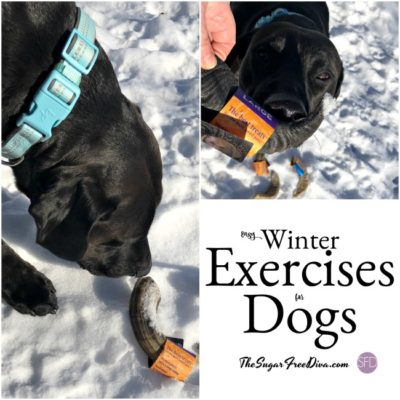 Easy Winter Exercise Safety Tips for Dogs